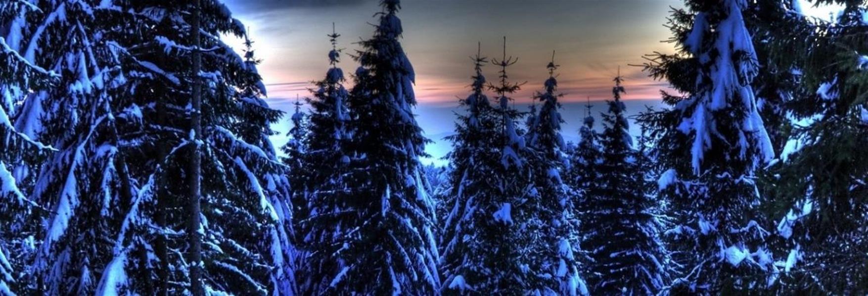 75332583-03aa-40eb-959a-e216d97f53ff_wintertrees.jpg